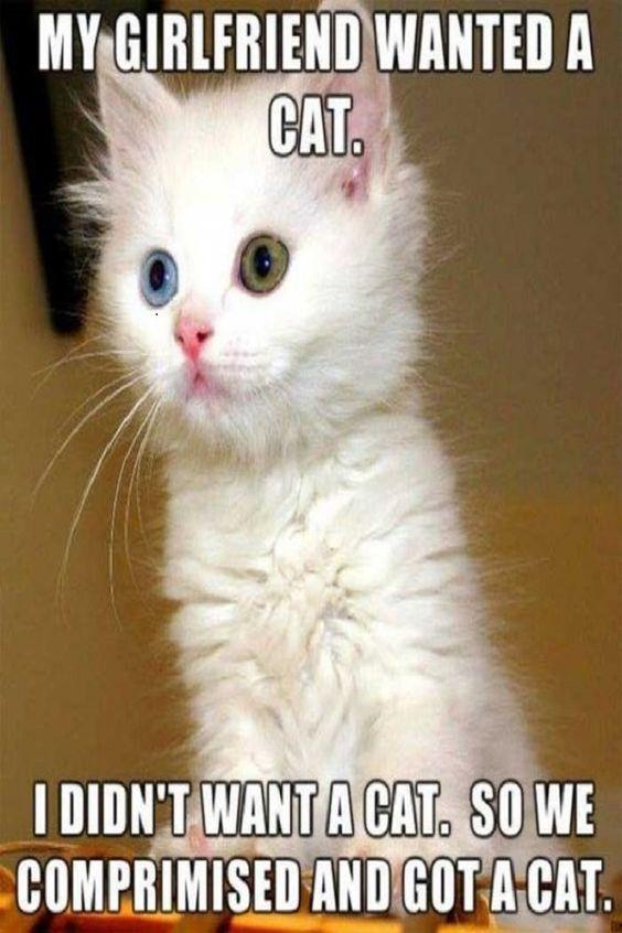 Soft Kitty, WarmKitty